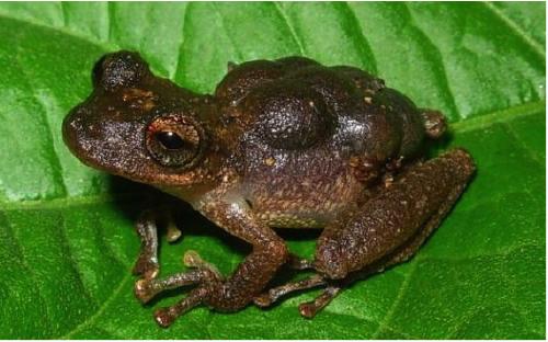 surinam-toad.jpg#asset:317